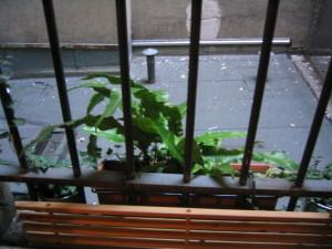 fenêtre accès cour